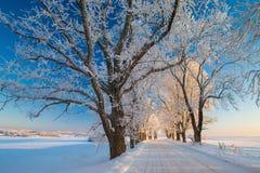 Vinterlandskap, väg, snö-täckte träd Mycket härlig tid nn Royaltyfri Foto