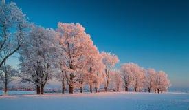 Vinterlandskap, väg, snö-täckte träd Mycket härlig tid nn Royaltyfria Foton