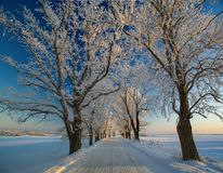 Vinterlandskap, väg, snö-täckte träd Mycket härlig tid nn Royaltyfria Bilder