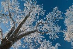 Vinterlandskap, väg, snö-täckte träd Mycket härlig tid nn Arkivbilder