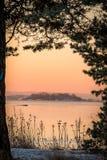 Vinterlandskapet i den rosa morgonljussikten av havet sörjer igenom träd Arkivbild