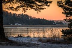 Vinterlandskapet i den rosa morgonljussikten av havet sörjer igenom träd Royaltyfri Foto