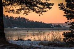 Vinterlandskapet i den rosa morgonljussikten av havet sörjer igenom träd Royaltyfria Foton