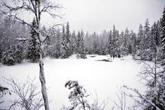 Vinterlandskapet med snö täckte träd, svart & vitt arkivfoto