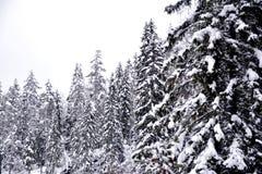 Vinterlandskapet med snö täckte träd, svart & vitt fotografering för bildbyråer