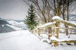 Vinterlandskapkura ihop sig trästaketet i vinterberg in Arkivbild
