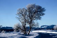 Vinterliggande i Norge Royaltyfria Bilder