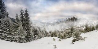 Vinterliggande med skogen arkivfoton