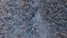 Vinterliggande med skogen lager videofilmer