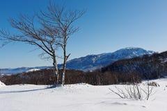Vinterliggande med snow och trees Arkivfoto