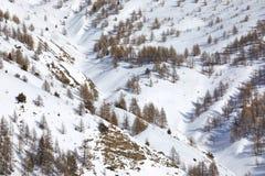 Vinterliggande med trees fotografering för bildbyråer