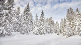 Vinterligganden med snow räknade trees royaltyfri fotografi