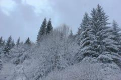 Vinterligganden med snow räknade trees Arkivbilder