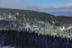 Vinterligganden med snow räknade trees Royaltyfri Foto