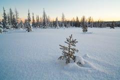 Vinterligganden med snow räknade trees Arkivbild