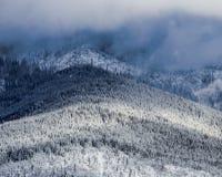 Vinterligganden med snow räknade trees Arkivfoto