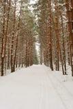 Vinterligganden med snow räknade trees Royaltyfria Foton