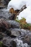 Vinterliten vik En liten bergström i vintern closeup royaltyfri fotografi