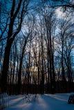 Vinterljus Royaltyfri Foto