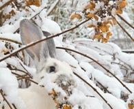 Vintermat Arkivfoto