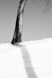 Vinterminimanism Royaltyfria Bilder