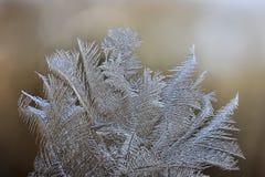 Vintermodeller av is på fönsterexponeringsglaset - makro Royaltyfria Bilder
