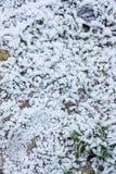 Vintermodeller i bulgariska berg Arkivbilder