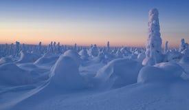 Vintermorgon Arkivfoton