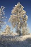 Vintermorgon Royaltyfri Bild