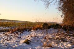 Vintermorgon i Februari Arkivbilder