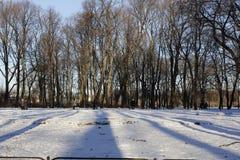 Vintermorgon i parkera Royaltyfri Bild