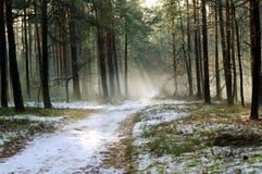 Vintermorgon i skogen. Arkivfoton