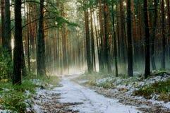 Vintermorgon i skogen. Royaltyfri Fotografi