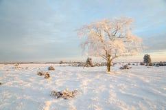 Vintermorgon med ett frostigt träd Royaltyfria Bilder