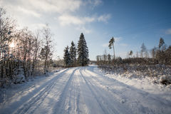 Vintermorgon som fryser förkylning Arkivbild