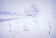 Vintermorgon V1 Royaltyfri Foto