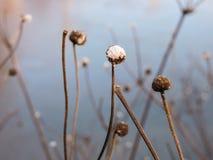 Vintern blommar i vattnet Arkivfoto