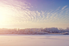 Vintern färgade landskapet med träd och frosterfloden i det kalla ljuset fördunklar på solnedgången arkivbild