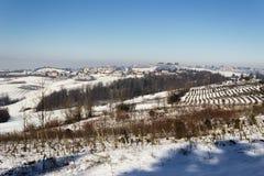 Vintern färgar i de Monferrato kullarna Piedmont, Italien fotografering för bildbyråer