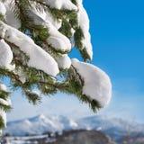 Vintern förgrena sig Royaltyfri Foto