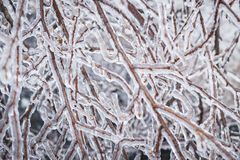 Vintern förgrena sig i is Arkivbild