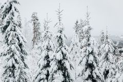 Vintern i Finland täckte i snö arkivbild