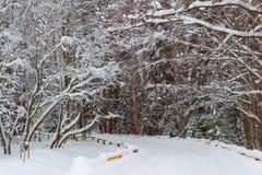 Vintern i stad parkerar snowdrifts Arkivbilder