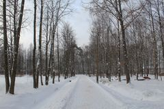 Vintern i staden parkerar Träd utan sidor, mycket snö kallt Djur önskar att äta arkivfoto
