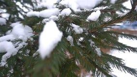 Vintern jul, gran förgrena sig under snön, jul formar på filialerna av granen HD lager videofilmer