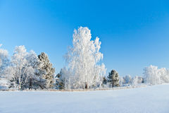 Vintern kom Fotografering för Bildbyråer