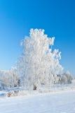 Vintern kom Royaltyfri Foto