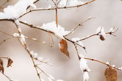 Vintern lämnar Arkivbild