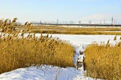 Vintern landskap 18 Royaltyfri Fotografi