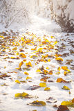 Vintern landskap Royaltyfri Bild